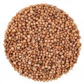 Coriander Seeds Extreme Closeup Isolated — Stock Photo