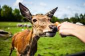 Editorial - July 29, 2014 at Parc Safari, Quebec , Canada on a b — Stock Photo