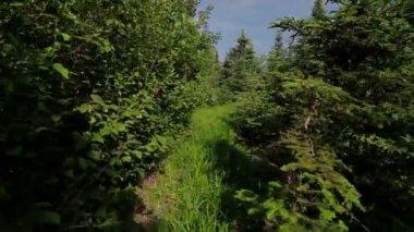 Man walking in forest — Stock Video