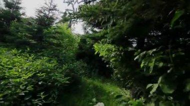 Man walking in forest — Video Stock
