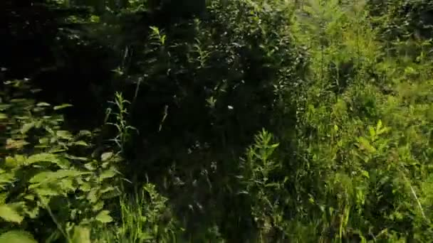 Hombre caminando en bosque — Vídeo de stock