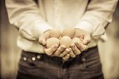 Closeup of Farmer Holding Eggs — Stock Photo