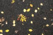 Autumn foliage on asphalted road — Stockfoto