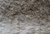 Shaggy abstract texture of wolf fur — Stock Photo
