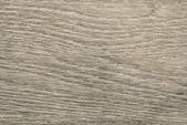 Longitudinal section tree of beige color — Stock Photo