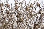 Sparrows sit in thickets of bushes — Stock Photo