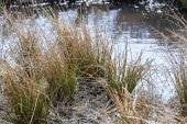 Natural marshland — Stock Photo