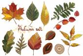Vector set with autumn set leaves, nuts, tree. — Stock Vector