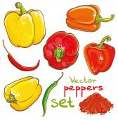 Vector illustration of peppers, chili peppers, cayenne and spice — Stock Vector
