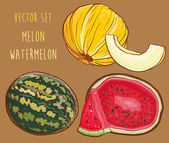 Vector set with fresh melon and watermelon — Stock Vector