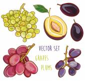 Vector set with plums and grapes — Stock Vector