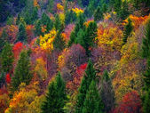 Autumn colorful Forest — Stock Photo