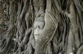 Guide for Phra Nakhon Si Ayutthaya. — Stock Photo