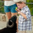 Little boy feeds the sheep to  zoo — Stock Photo #52860057
