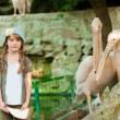 Little girl at the zoo with  pelicans — Stock Photo #52861049