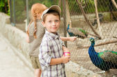 Children are fed at the zoo peacocks — Zdjęcie stockowe