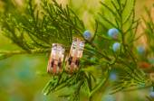 Wedding rings hanging on   tree — Stock Photo