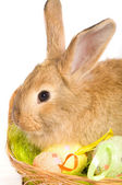 Easter bunny with basket and  eggs — Stock Photo