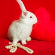 White rabbit and red heart white pearls — Stock Photo #62036919