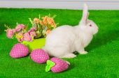 White rabbit on the grass with flowers and a baske — Stock Photo