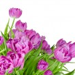 Bouquet of pink tulips in flowerpot isolated on white — Stock Photo #51823787