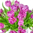 Bouquet of pink tulips in flowerpot isolated on white — Stock Photo #52140925