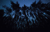 A beautiful night sky, the Milky Way and the trees — Stock Photo
