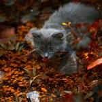 Little kitten playing on the grass — Stock Photo #62986875