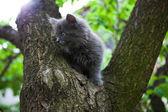 Little kitten playing on the tree — Stock Photo