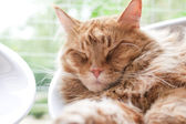Cat relaxes at home — Stock Photo