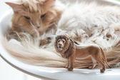Cat plays with plastic toy — Zdjęcie stockowe