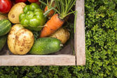 Organic vegetables in wooden box — 图库照片