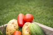 Home grown vegetables from garden — Stock Photo