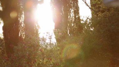 Sunbeams in mediterranean Garden — Video Stock