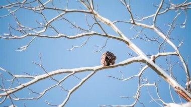 Bird sitting on branch — Stock Video
