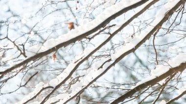 晴れた冬の日のブランチ — ストックビデオ