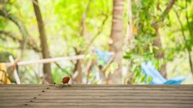 Bird on wooden table — Stock Video