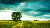 Road in a field — Stock Photo