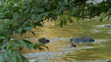 Calming brook flowing — Stock Video