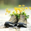 Hiking boots with yellow wild flowers — Stock Photo #54333073