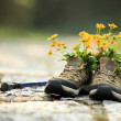 Flowers and hiking boots on trail — Stock Photo #57574463
