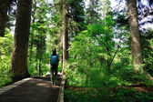 Hiking woman on forest — Stock Photo