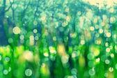 Bokeh grass background — Stock Photo