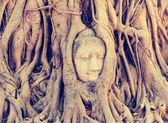 Buddha head in tree roots — Stockfoto