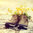 Hiking boots with wild flowers — Stock Photo #71175049
