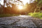 Biegacz lekkoatletka uruchomiony na szlak leśny — Zdjęcie stockowe
