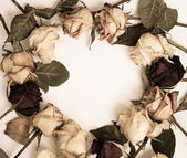 Withered rose frame — Stock Photo