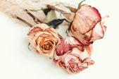 Fading rose — Stock Photo