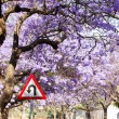 U-turn road sign against beautiful purple flowers of blossoming — Stock Photo #58391629
