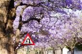 U-turn road sign against beautiful purple flowers of blossoming  — Stock Photo